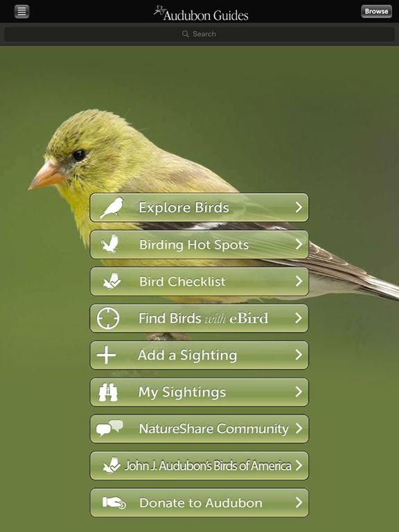 Central America-birds – Ornithology