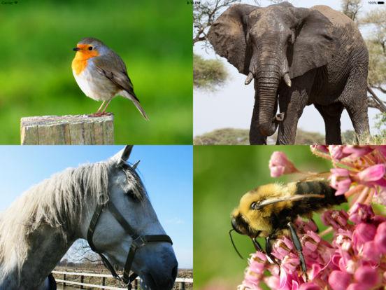 Learn and Go Animals iPad Screenshot 1