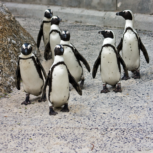Penguins Study Guide