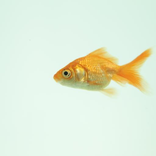 Good And Bad Beginner Fish
