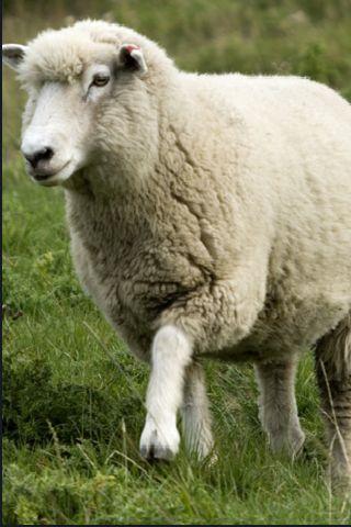 SlidePuzzle - Sheep screenshot #3