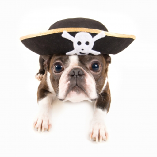 Pirate Dog Slide Puzzle