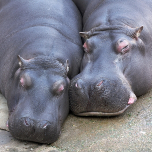 Lazy Hippos Slide Puzzle
