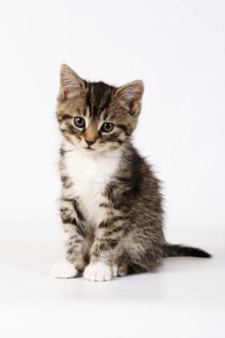 iGuides - Picking A Kitten screenshot #1