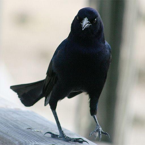 SlidePuzzle - Crow