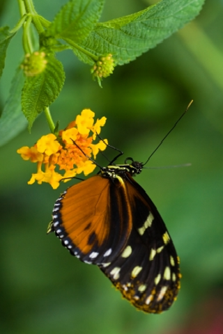 Tropical Butterfly Slide Puzzle screenshot #1