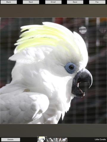 Zoo Birds screenshot 6