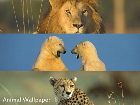 Animals WP HD for iPad screenshot 3