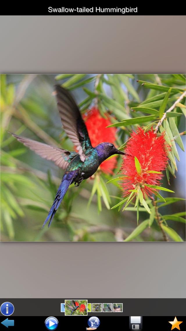 Hummingbirds Guide screenshot 2