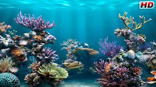 Aquarium 4K √ screenshot 2
