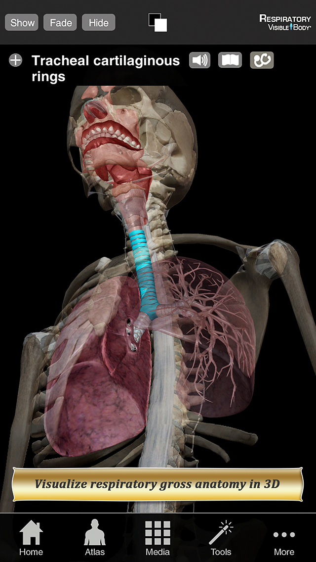 Respiratory Anatomy Atlas: Essential Reference for Students and Healthcare Professionals screenshot 1