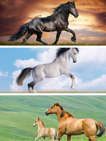 Horse Wallpapers HD - Collection of Running Horses screenshot 8