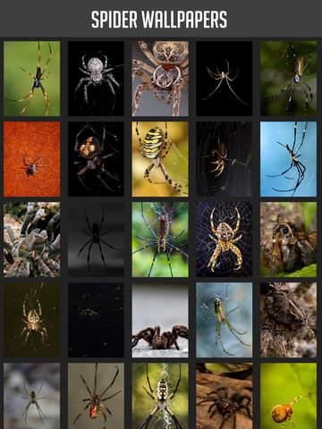 Spider Wallpapers screenshot 6