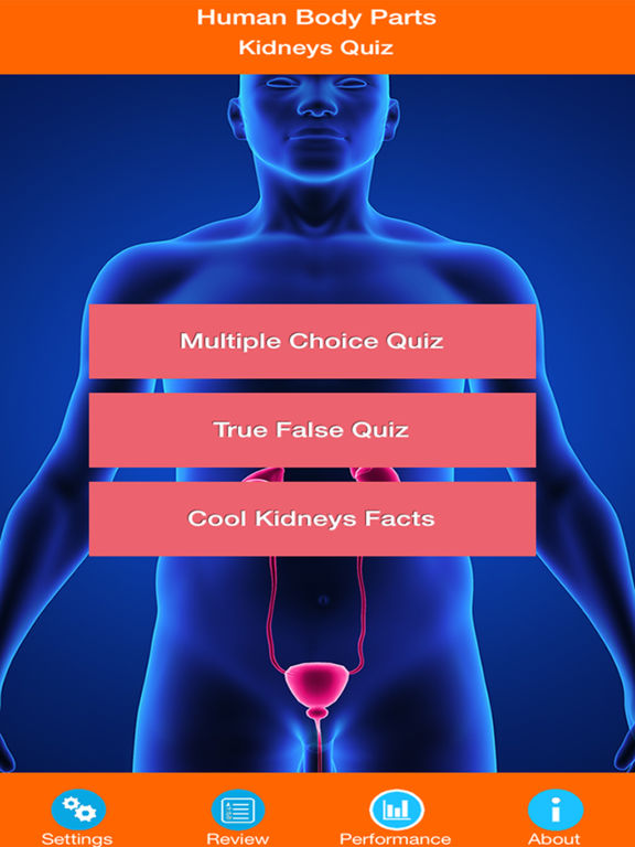 Human Body Parts : Kidneys Quiz screenshot 6