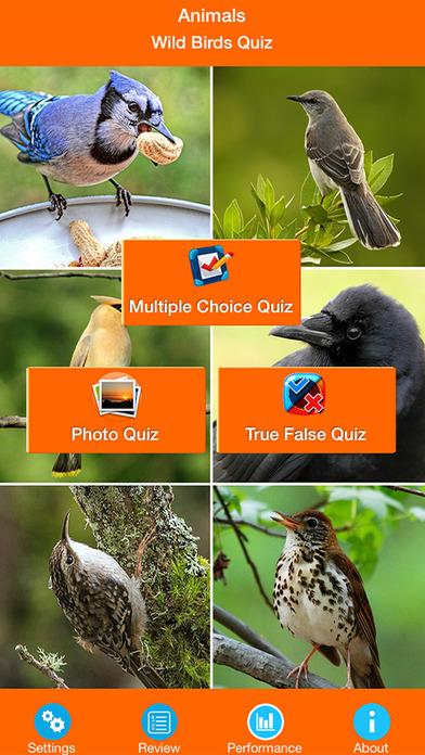 Animals : Wild Birds Quiz screenshot 1