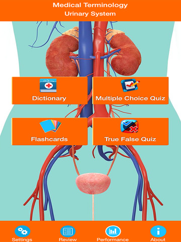 Urinary System Medical Terms screenshot 6