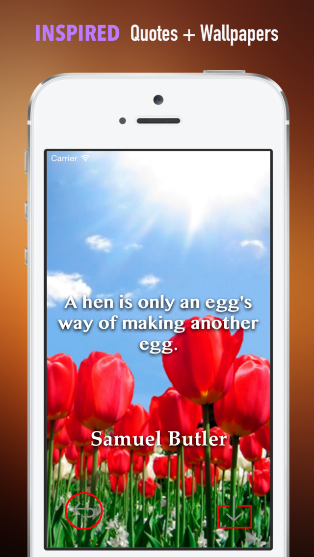 Tulip Wallpapers HD: Quotes Backgrounds with Art Pictures screenshot 5