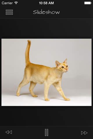 Cats Info Pro - náhled