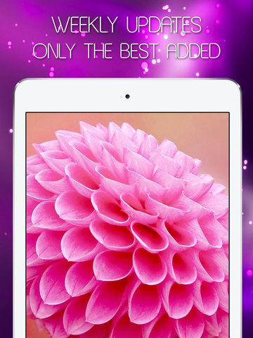 Colorful Girly Wallpapers & Pink Backgrounds HD - Live Pink Themes & Fairy Images for Girls screenshot 10