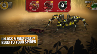 Real Scary Spiders screenshot 3