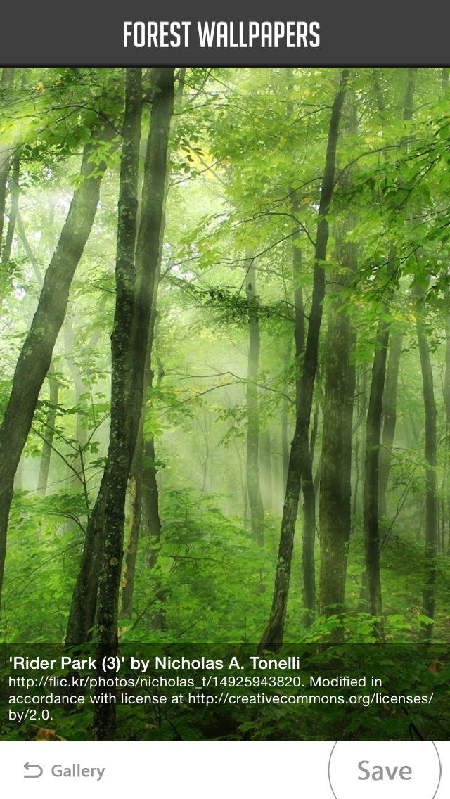 Forest Wallpapers screenshot 2