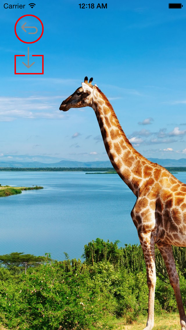 Best HD Giraffe Art Wallpapers for iOS 8 Backgrounds: Animal Theme Pictures Collection screenshot 3