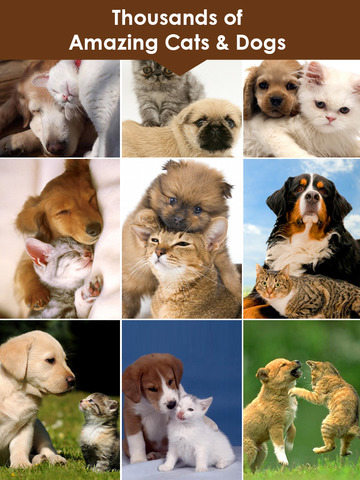 Cats & Dogs Wallpapers HD - Cute Puppies & Kittens screenshot 6