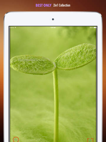 Nature Sounds Ringtones and Wallpapers: Theme your Phone to be back to the Nature screenshot 10