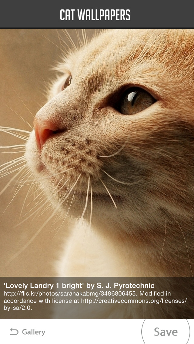 Cat Wallpapers! screenshot 5
