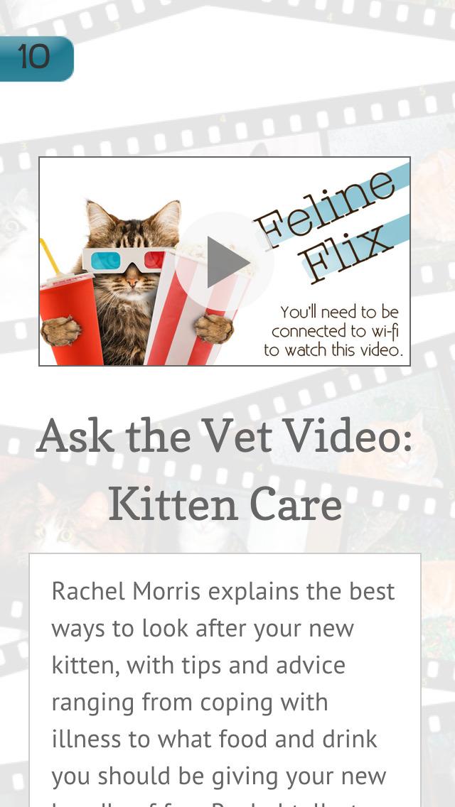 Buying A Kitten screenshot 5
