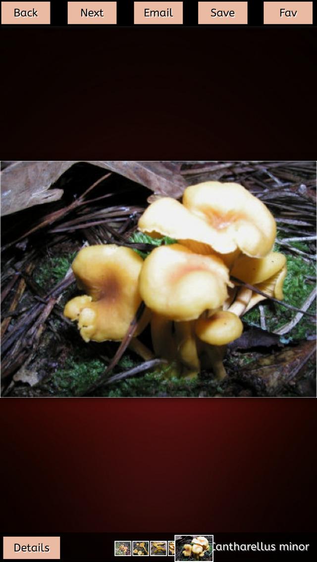Mushrooms Collection+ screenshot 3