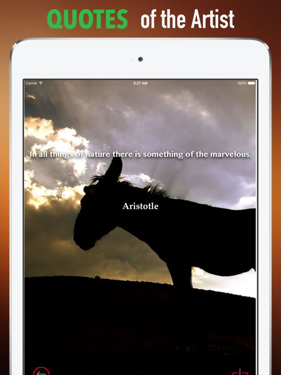 Donkeys Wallpapers HD: Quotes Backgrounds screenshot 9