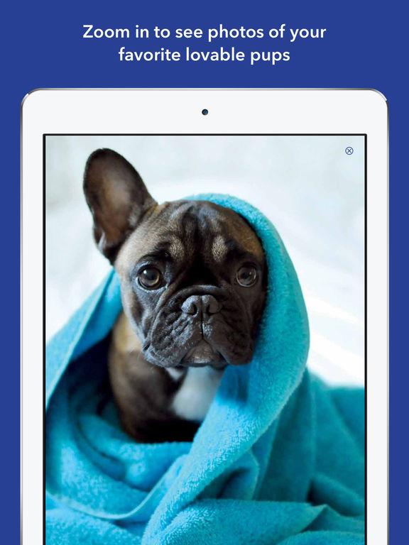 365 Dogs Page-A-Day Calendar 2017 screenshot 9
