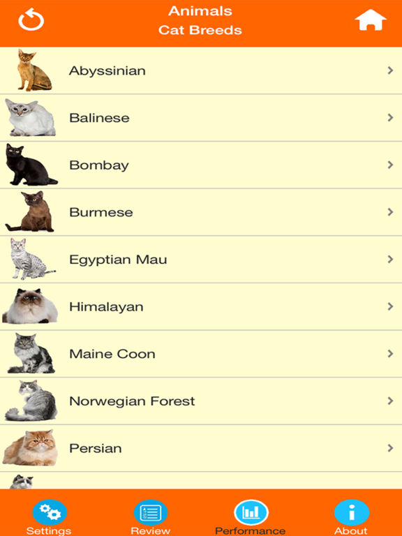 Cat Breeds Quiz screenshot 10
