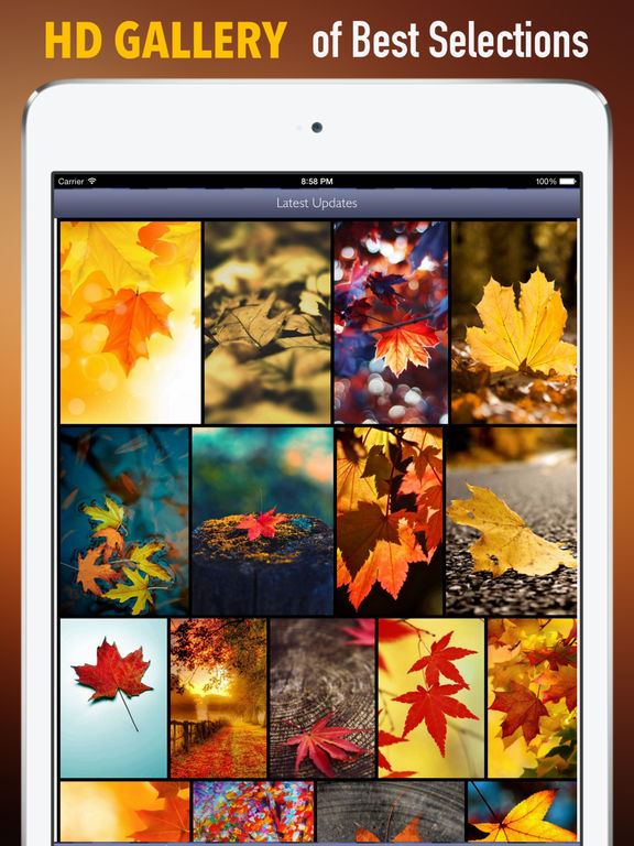 Autumn Leaf Wallpapers HD: Quotes Backgrounds with Art Pictures screenshot 6